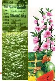 Văn hóa uống trà – Nét đẹp ngày Tết Việt