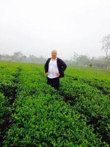 Trà xuân Thái Nguyên đã cho thu hoạch bắt đầu mùa vụ mới