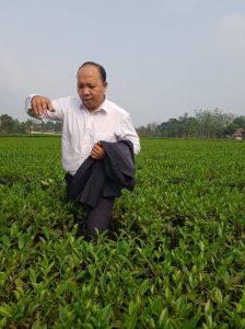 Làm sao mua trà Thái Nguyên ở tp HCM giá rẻ ?
